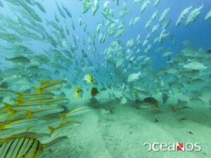 Cabo Pulmo Oceanos Buceo